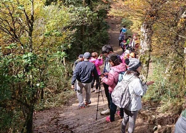 山毛櫸步道的登山賞景人潮爆多,羅東林管處為維護遊憩品質,首度啟動2段式車流總量管制。圖/讀者提供