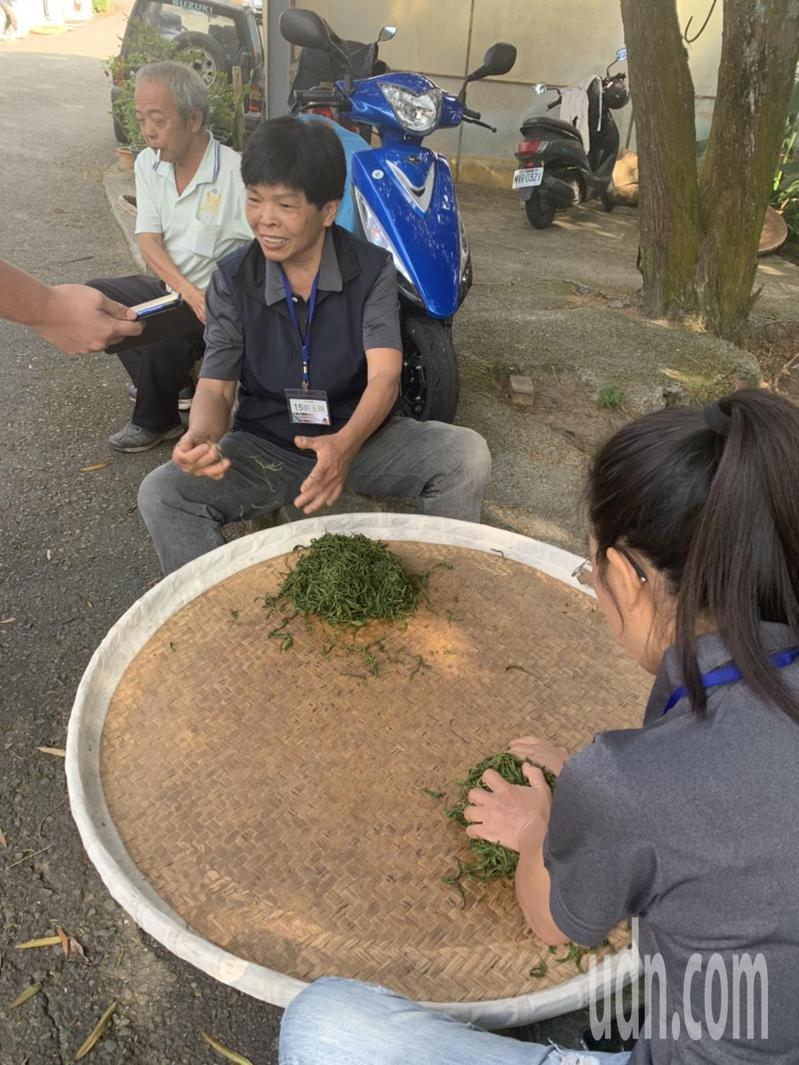 魚池鄉農會大葉種紅茶採製茶比賽,昨天完成揉捻烘焙製成後,由茶改場魚池分場及專家進行評鑑工作,隨即公布優勝成績。記者黑中亮/攝影