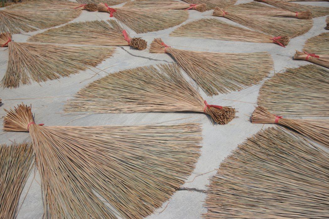 藺草收割後要曬草,不能遇到下雨,等於看天吃飯。 圖╱藺子提供