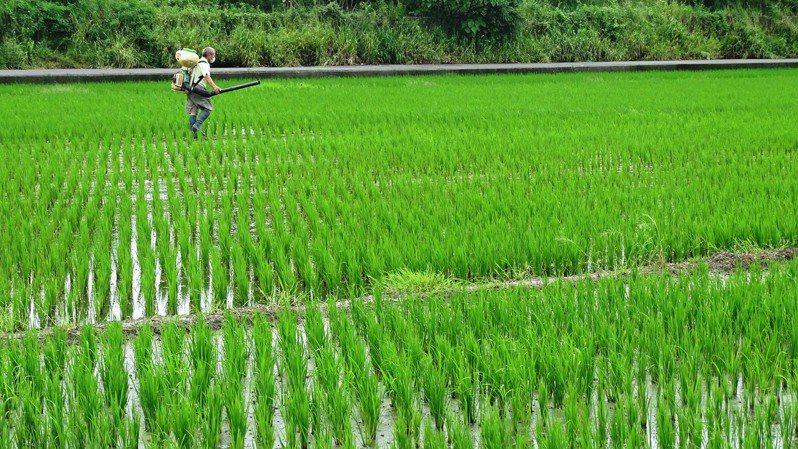 台灣農村缺工嚴重,圖為農夫獨守農田耕作,非新聞當事人。記者何烱榮攝影/報系資料照