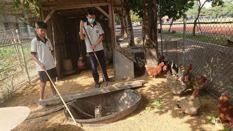 彰化縣北斗國中學生打掃雞舍。記者簡慧珍/攝影