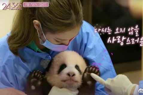南韓女團BLACKPINK在最近曝光的團綜預告片中前進韓國愛寶樂園,與熊貓寶寶「福寶」見面,不過大陸網友看到播出畫面後,怒控她們與熊貓寶寶接觸卻沒有做好防護措施,增加熊貓寶寶感染細菌的風險!在播出的...