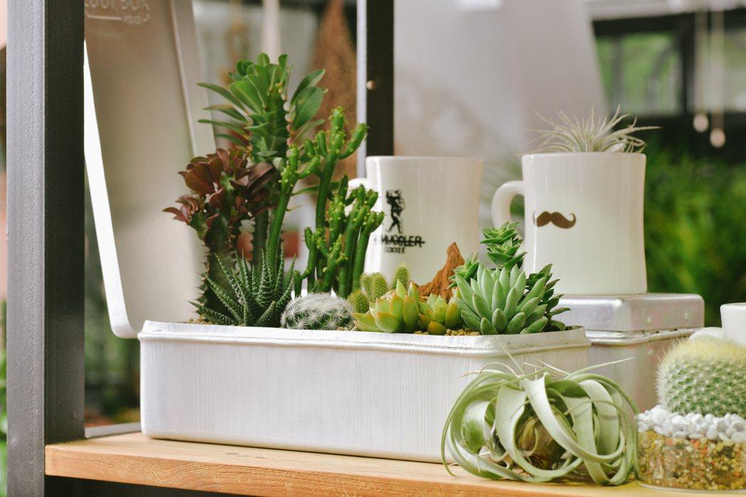 有肉攜手A Design&Life Project推出限定滿額贈品「這組盆栽」。...