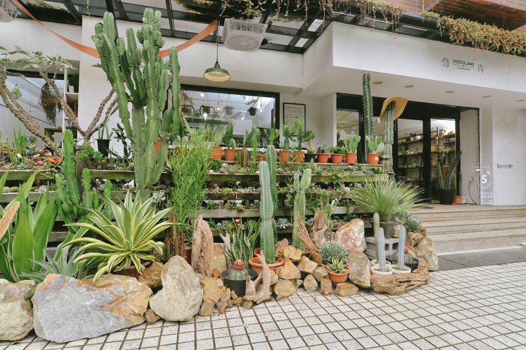 有肉5周年植物牆。 圖/有肉Succulent & Gift提供