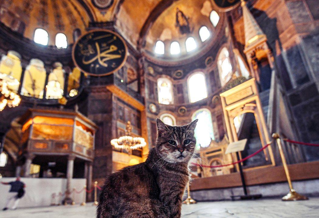 11月7日,聖索菲亞大教堂的聖殿守護貓Gli,以16歲高齡蒙主寵召。 圖/法新社