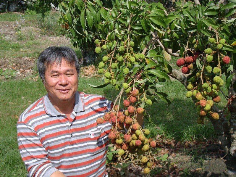 對抗氣候變遷,太麻里果農胡漢傑栽種新品種「豔荔」荔枝,不僅可耐熱,產期還提早到元宵節就吃得到。圖/胡漢傑提供