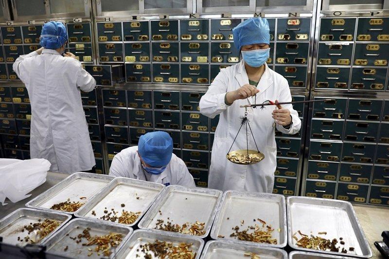 自從西方現代性影響中國起,中醫藥就未曾擺脫過政治傾向的角力。圖為北京地壇醫院中醫藥藥師在配置藥物。 圖/中新社