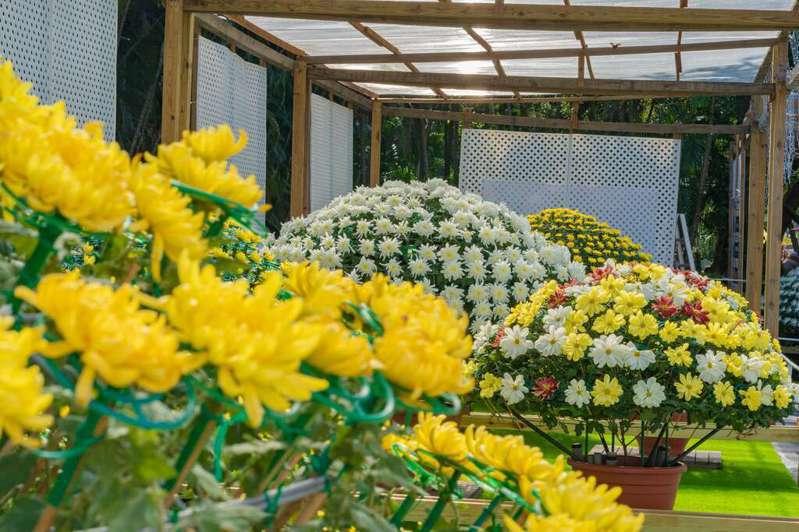 各式菊花品種的花卉也將展出,供民眾拍照遊憩。 圖/台北旅遊網(隸屬臺北市政府觀光傳播局)
