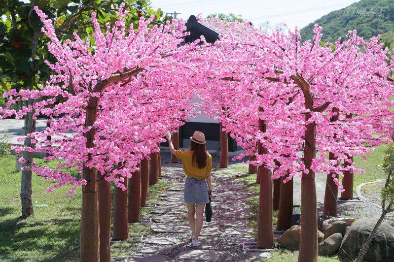 四重溪溫泉公園的櫻花步道美不勝收。
