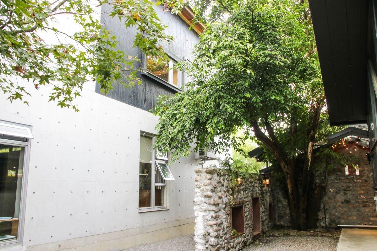 百歲老雀榕樹,屋子主人拆掉屋頂將天空露出來,空氣中流動著有機村裡的慢活步調。 圖...