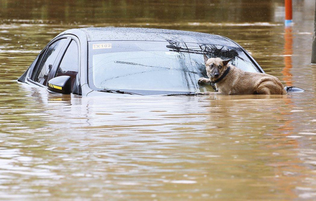 一片汪洋的馬尼拉,無助的小狗等待救援。攝影記者為歐新社的Rolex dela P...