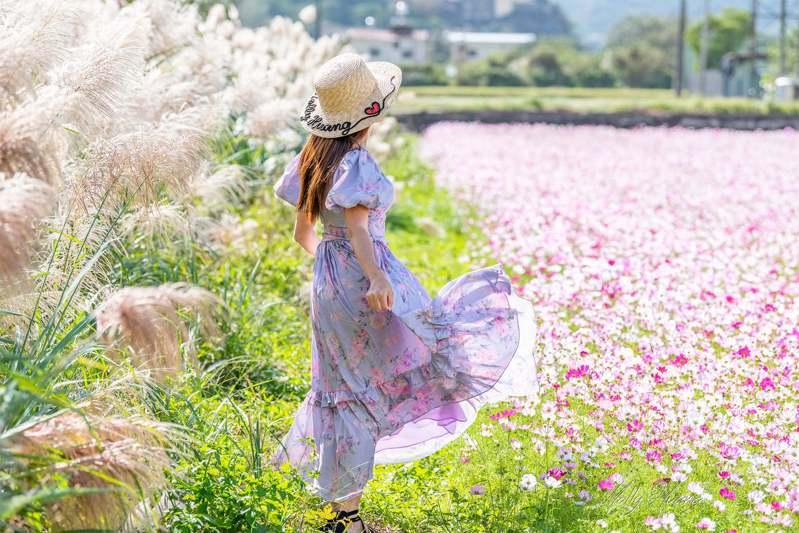 園內隱藏了一處粉白秘境,能夠一次拍到芒花、波斯菊營造的浪漫風光。圖/IG@molly888666授權