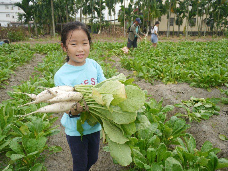 從沒拔過蘿蔔的小妹妹開心拔蘿蔔,開心說「很好玩」。記者徐白櫻/攝影