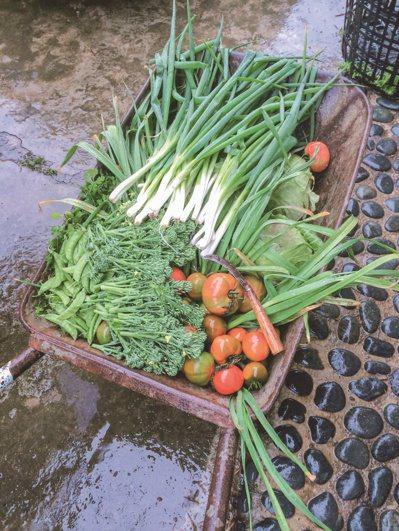 出生台灣稻米之鄉、每天吃飯,我卻不知道稻子是怎麼生長的,甚至沒有摸過土壤、種過蔬...