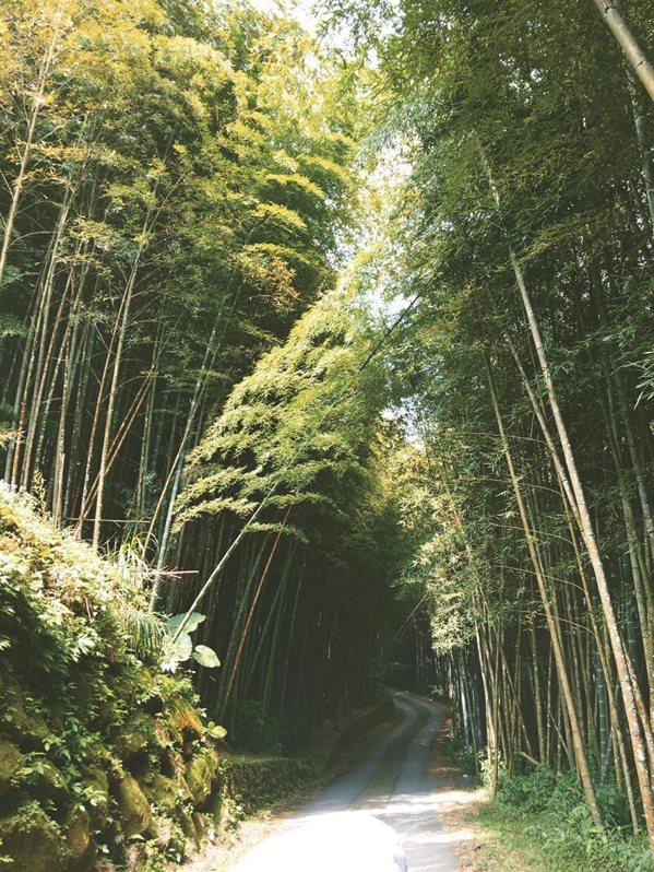 茂密的石竹林