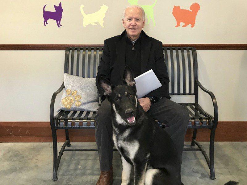 拜登2018年向德拉瓦人道協會收養了之前寄養在他家的德國牧羊犬「少校」。美聯社