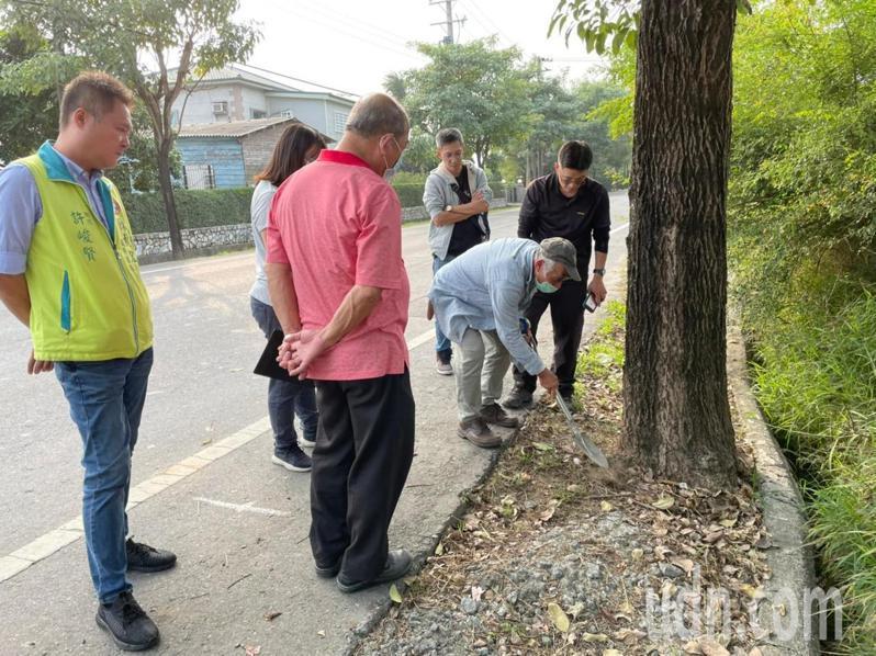 台南市府工務局邀樹木專家李武昌診斷下營174道路洋紅風鈴木。圖/工務局提供