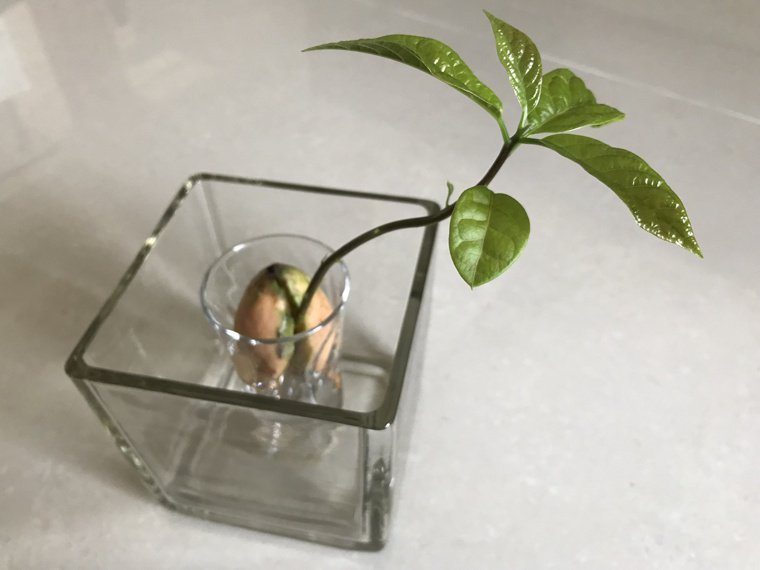 室內植栽可減少空氣中的化學物,植物的光合作用也有吸收二氧化碳釋出氧氣的效果。圖/...