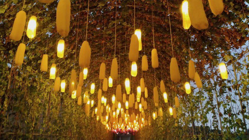 上千絲瓜經過著色、點燈,成為嘉義新亮點。記者莊祖銘/翻攝