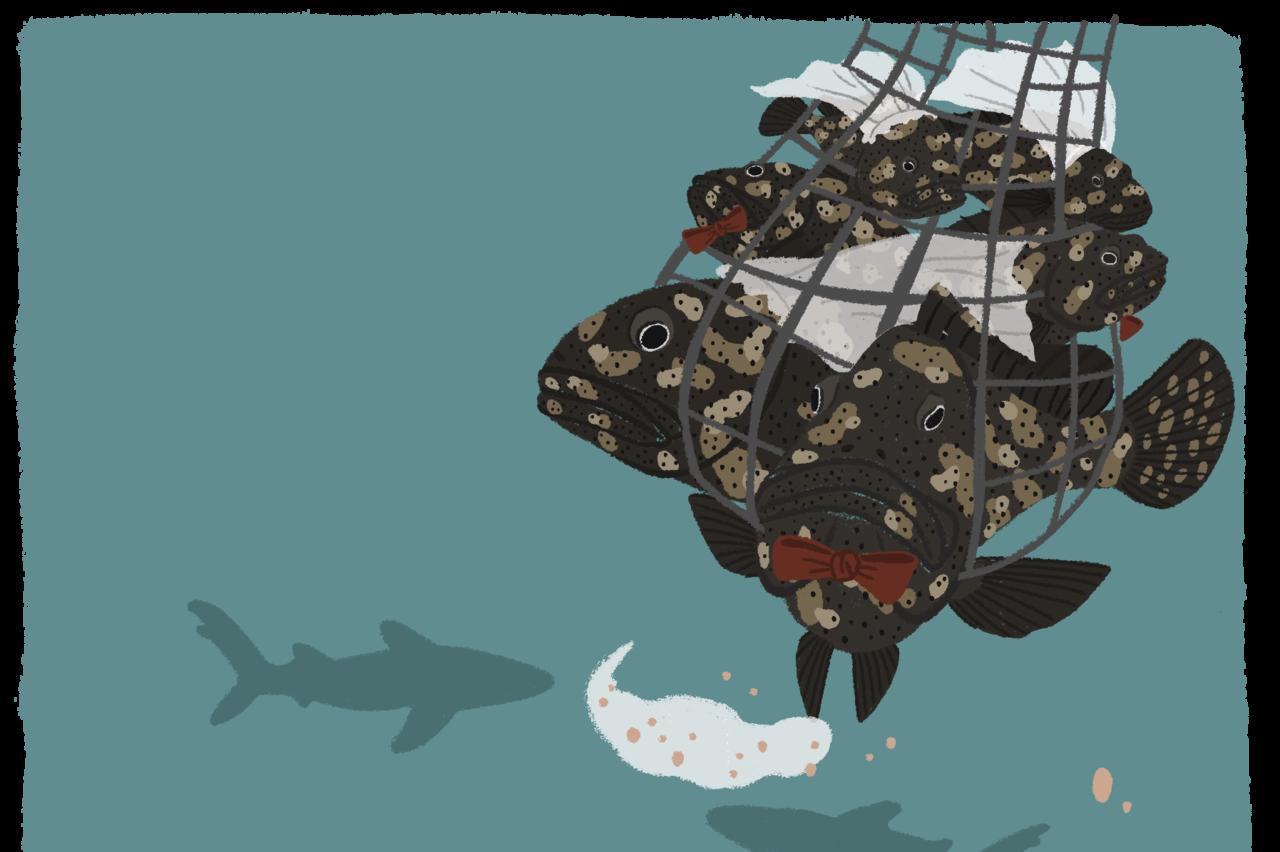 【珊海經】布朗尼飛魚/珊瑚礁魚類的鹿鼎山