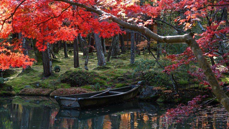 京都西山的西芳寺,因被多達120種苔類植物覆蓋而得「苔寺」之名,是我心目中京都最佳的賞楓景點。圖/梁旅珠提供