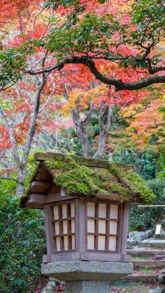 青苔為庭園中的景物,不論是飛石燈籠,添加了生命的深度與時間感。圖/梁旅珠提供