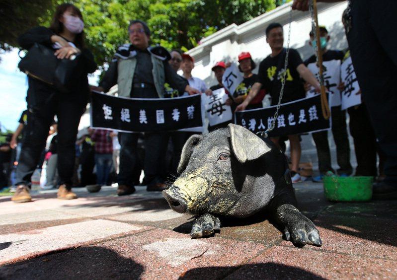 「秋鬥」遊行即將登場,主辦單位昨天帶著豬在凱道舉辦誓師記者會,邀請民眾周日上街反萊豬進口。記者林澔一/攝影