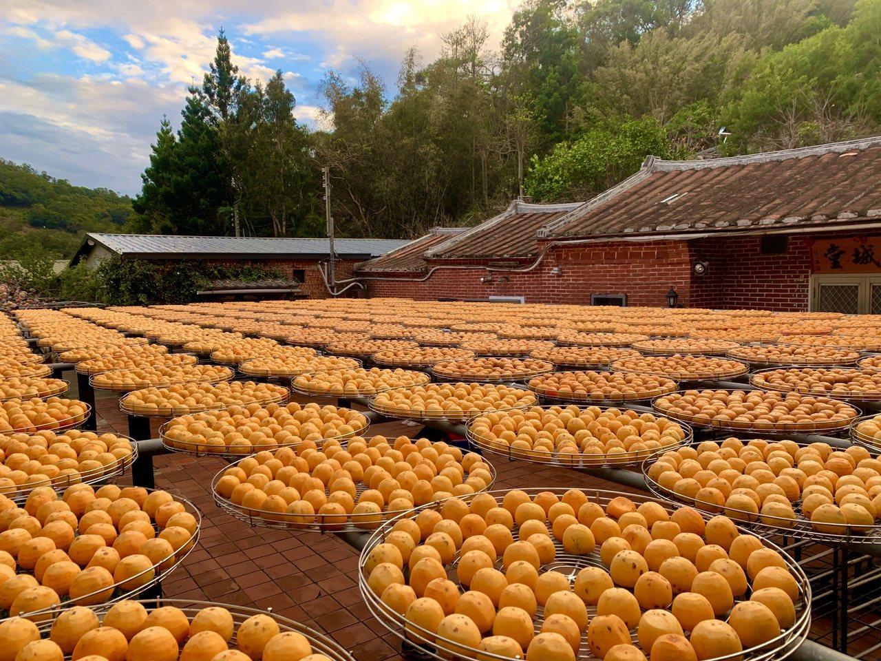 每年入秋之後,新竹鄉下的客家三合院就會曬起一盤盤的柿餅,成為獨特的客庄秋日美景。...