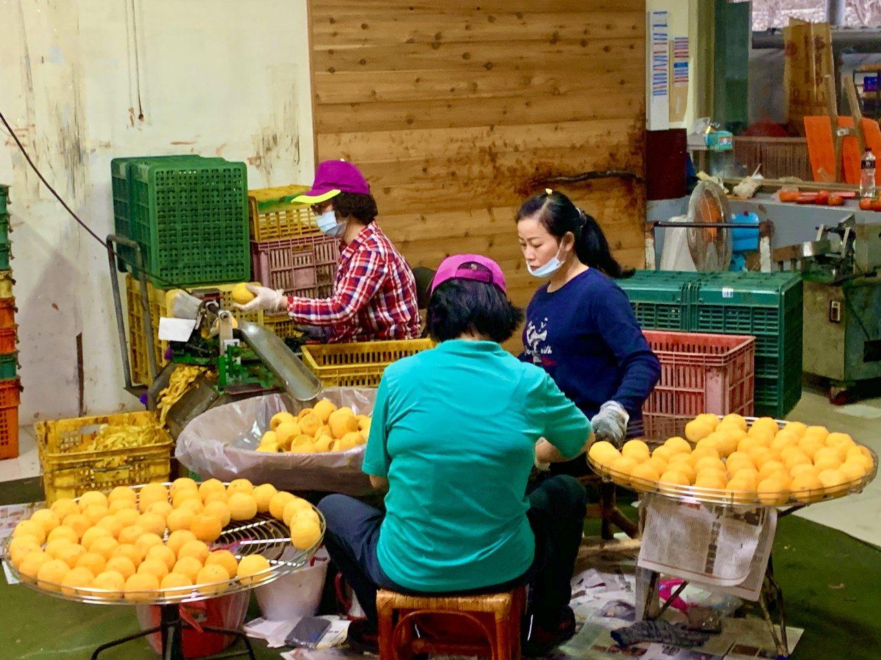 柿餅的製作需要經過7天工序,除了削皮外,人工還要配合日出曬柿、日落收柿,更要看天...