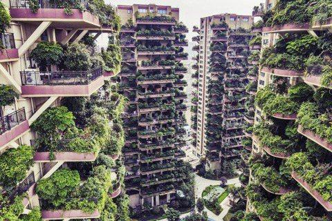 「七一城市森林花園」位於中國四川省成都市的新都區,整個社區建築群一共有8棟、每棟...