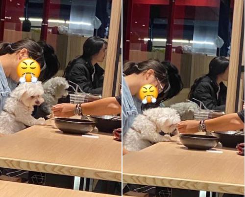 兩名民眾帶寵物犬到餐廳用餐,竟用店家餐具餵食狗狗。圖擷自「爆怨2公社」臉書社團