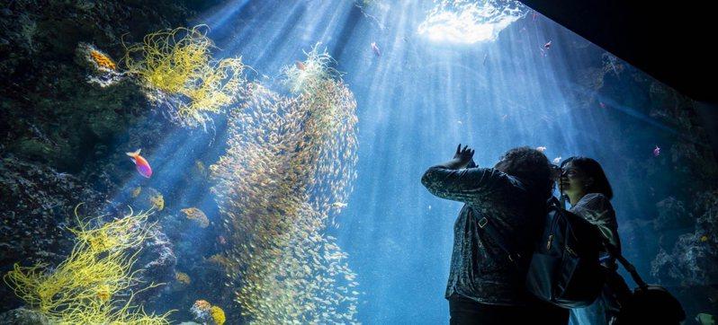 【日本極上美食之常磐海產特輯】04 食在安心?福島當地魚市現場直擊之磐城篇