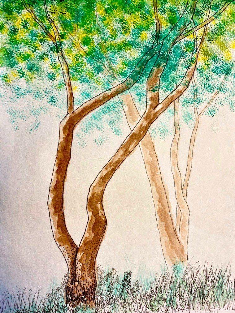 每年五到七月是相思樹的開花季節,一顆顆毛茸茸的黃色圓球布滿樹梢,非常可愛。圖/朱...