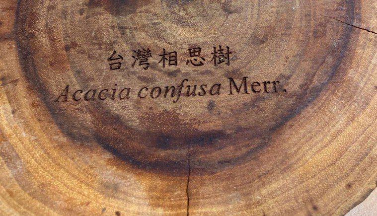 台灣相思木的硬度比緬甸柚木還硬,很適合做成原木家具、原木地板。圖/朱慧芳提供