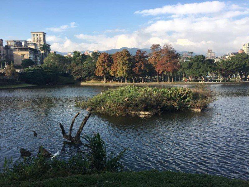 北市府在內湖碧湖建立兩座浮島,保護留鳥不受鼠類攻擊。圖/民眾張博安提供