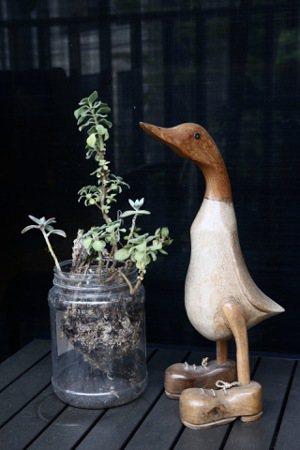 張金鶚家中到處是親友、學生從世界各地帶給他的鴨子擺飾。記者黃義書/攝影