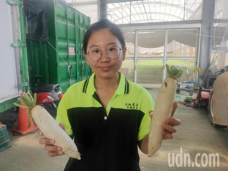 台南新市白蘿蔔成熟,農民陳思吟開放民眾下田採收產地價俗賣。記者周宗禎攝影