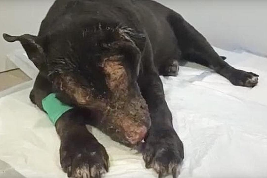 狗英雄勇闖失火療養院救4人 自己卻倒下受嚴重燒傷