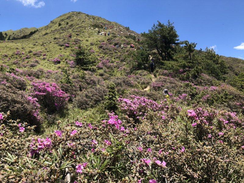 登山有益身心健康,又能親近大自然,是許多人喜愛的戶外運動之一, 聯合報系資料照片/記者江良誠攝影
