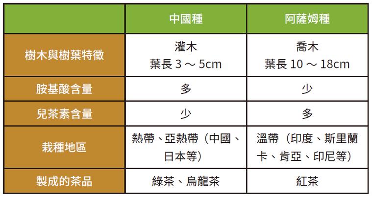 中國種、阿薩姆種茶樹的比較*「多」與「少」是兩種茶樹的相對比較結果。 圖/摘...