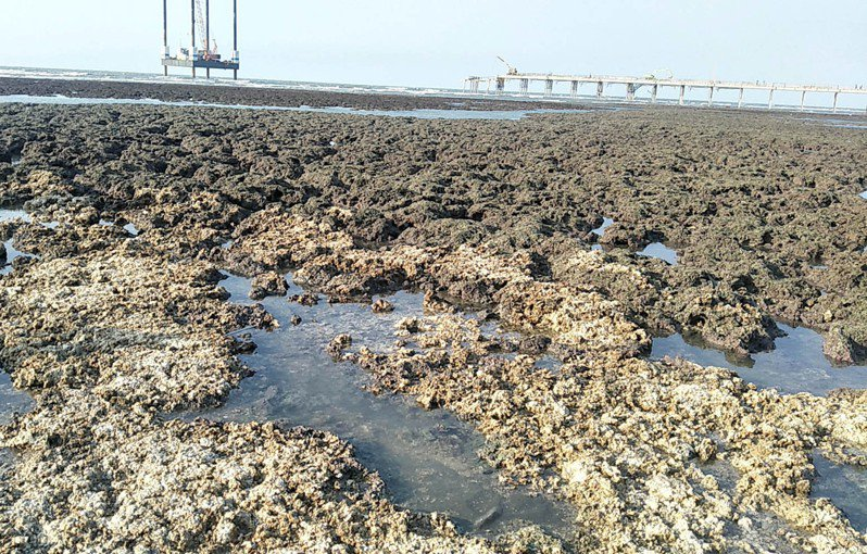 桃園市搶救大潭藻礁行動聯盟質疑中油工作船又擱淺破壞大潭藻礁,明舉辦記者會說明「珍愛藻礁」2階連署及要求中油停工調查。記者曾增勳/攝影