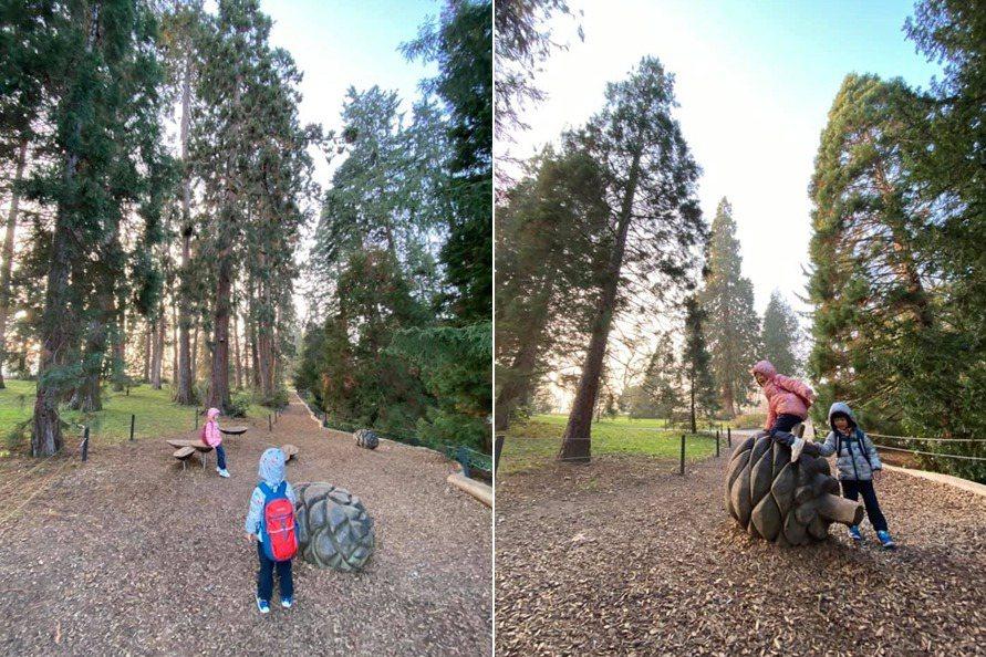 松樹森林有一些大型松果的裝置,可以給孩子爬。 圖/作者提供
