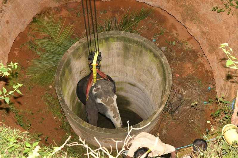 印度一頭掉入水井的母象被用起重機救出。取自推特(@THChennai)