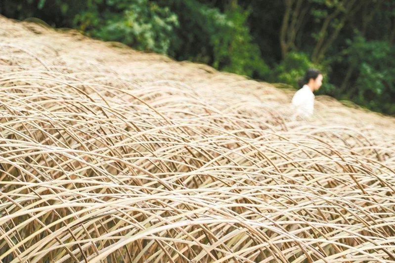 藝術家林靖格以千萬支竹板,創造「風的季節」。  圖/東北角國家風景區提供
