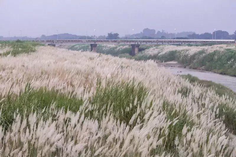 八掌溪花海秘境。 圖/取自台南旅遊網