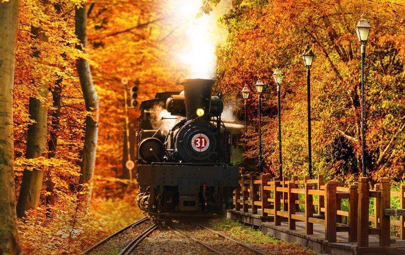 媲美日本楓紅,阿里山國寶蒸汽火車出巡賞楓。圖/雄獅旅遊提供