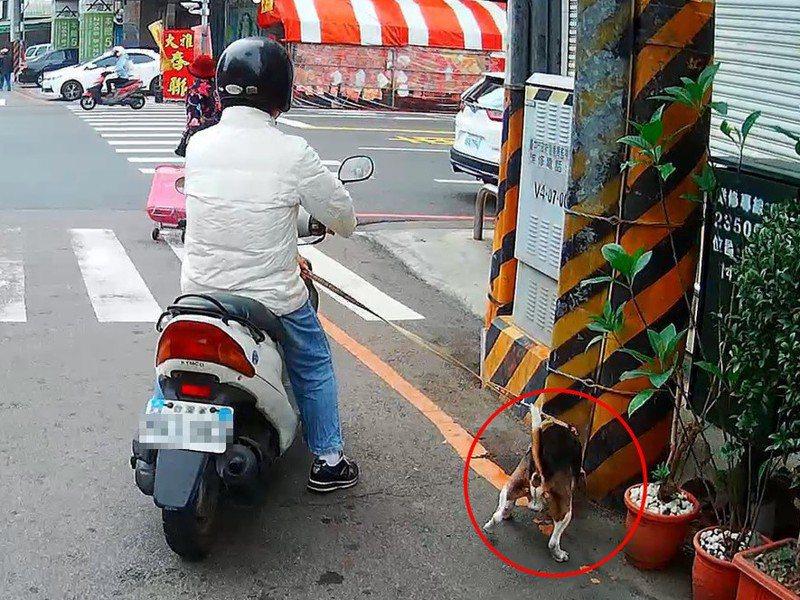 遛狗留便造成環境骯亂,台北、台中祭出高比率的檢舉獎金,鼓勵全民來檢舉。圖/台中市環保局提供