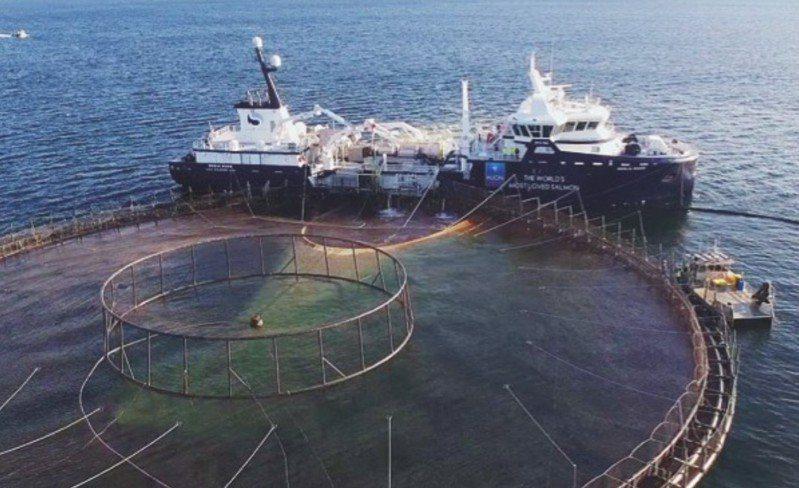 休恩水產養殖公司位於荷巴特南方恩特卡斯特克斯海峽的養殖魚場,23日發生這場意外,大火燒毀了部分箱網,導致大量養殖鮭魚成功脫逃。Huon Aquaculture