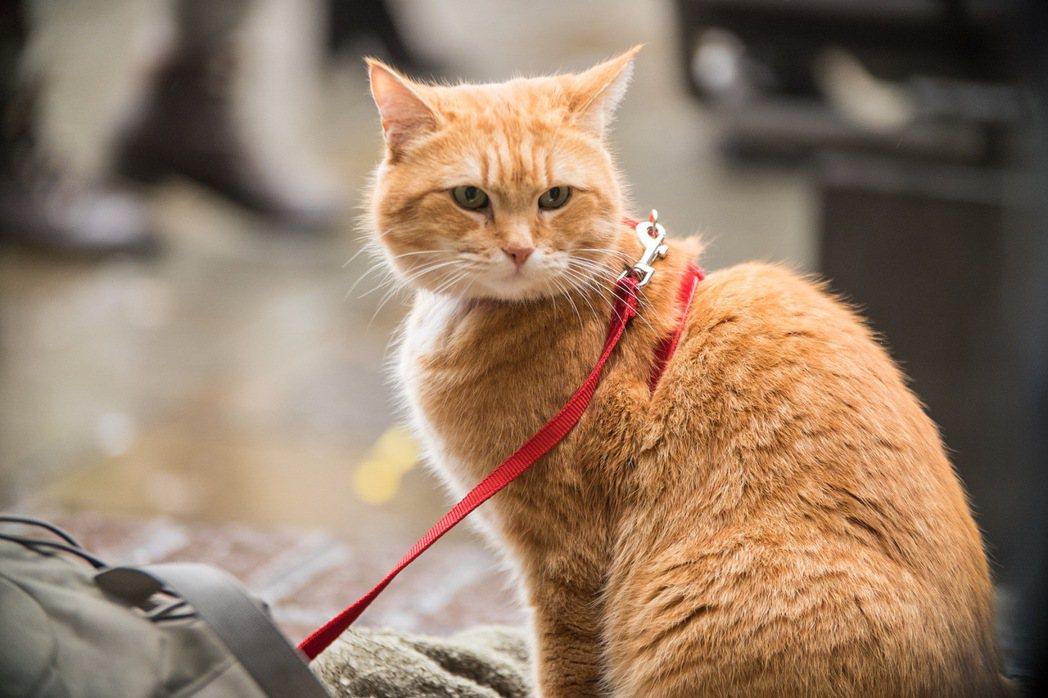 「再見街貓BOB」。圖/采昌提供