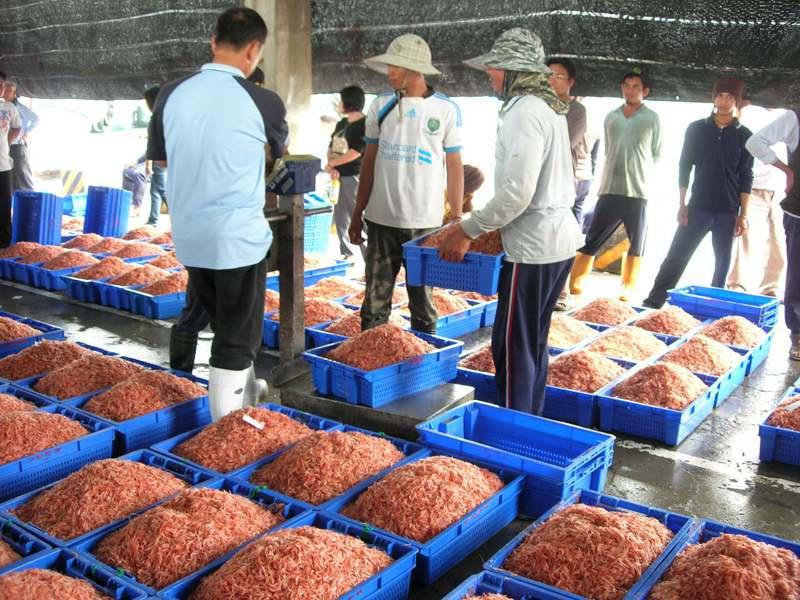 屏東東港櫻花蝦捕撈期本月9日起跑,批發價一箱15公斤在5千至6千元間,體型較小的赤尾青蝦則是700至800元間,兩者價格懸殊。記者潘欣中/翻攝